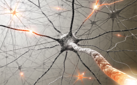 neurones et mind mapping
