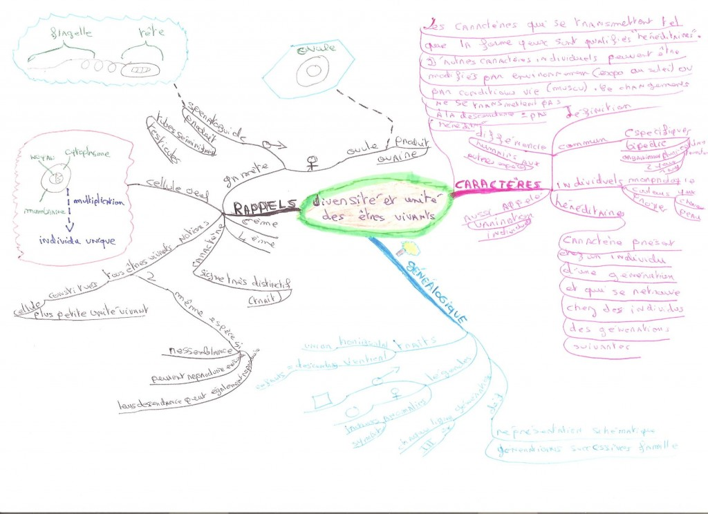 mind map svt 002 001