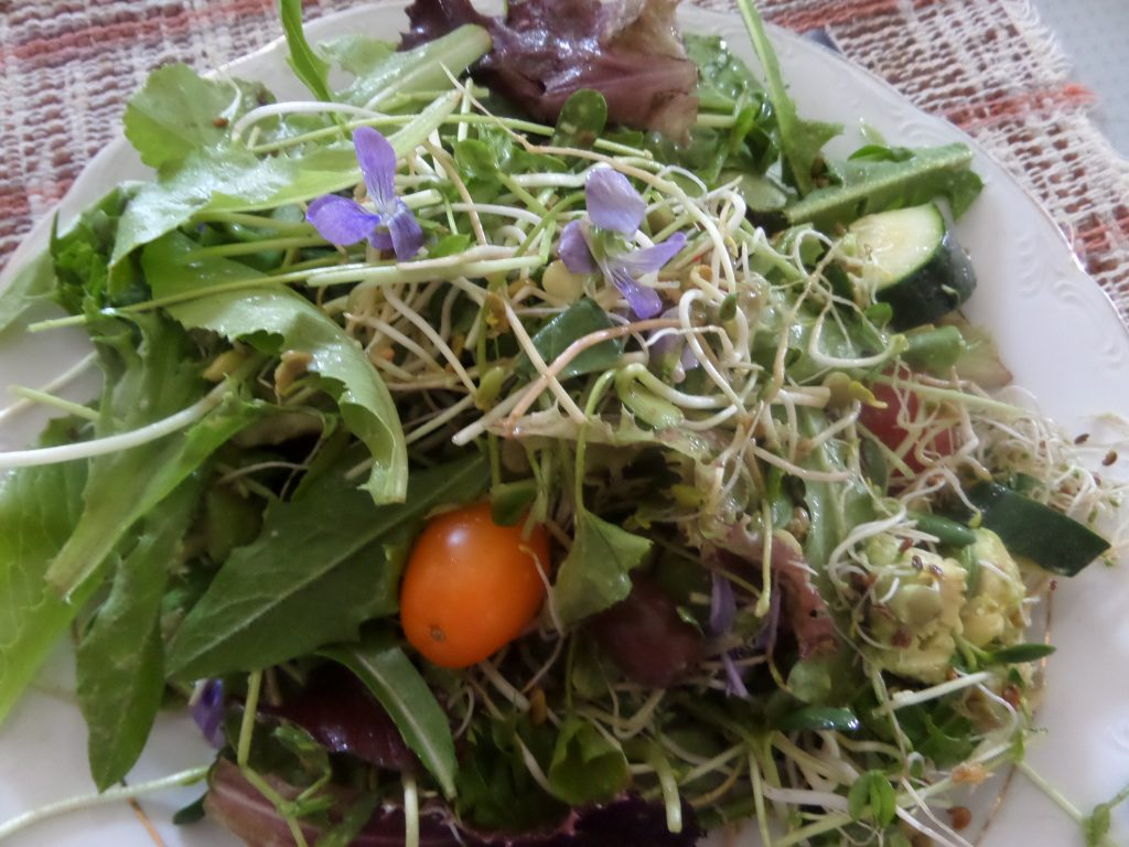 photo salade de plantes sauvages